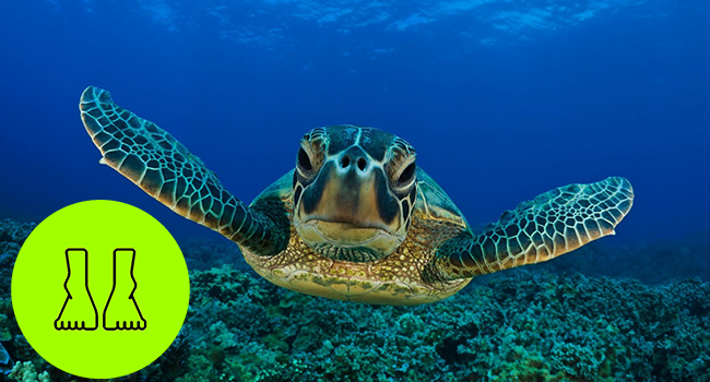 analogia dos cascos de tartaruga texto anderson
