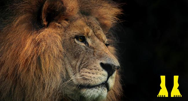 lioninyourpath
